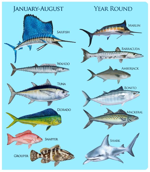 fish-chart